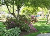 flower garden designs – flowering shade garden ideas [640x467 ...