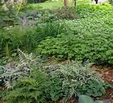 Shady Garden on Shade Garden