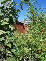 garden arch trellis