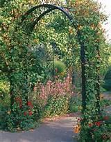 Garden Arches & Rose Arches - Garden Arch Portofino