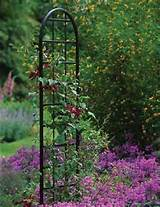 garden obelisks burlington trellis