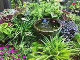 Shade/partial sun garden nook – water garden » Partial shade garden ...