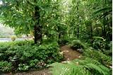 SHADE AND WOODLAND GARDENS