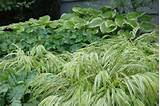 Selection of gorgeous foliage perennials in a shade garden