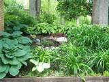 Shade Garden, Shade Garden with fountain, little japanese maple ...