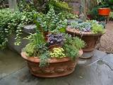 great mixed herb garden patio container ideas mixed garden patio