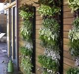 Vertical Herb Garden. Apartment Patio
