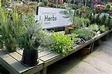 herbs on a patio garden