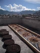 semilla nueva guatemala