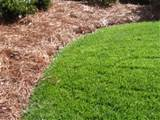 below is another crisp edge with pine needles mulch folded into the