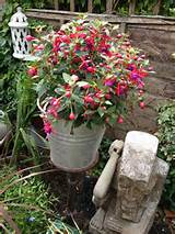 very packed Fuschia container