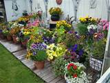 Container Gardening Ideas 2 Container Gardening Ideas