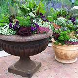 PATIO CONTAINER GARDENING DESIGN