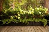 Container Gardening Ideas – Patio Pots, Patio Planters, Urns and ...