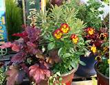 Ascot Rainbow' euphorbia with a pinky heuchera and a red-edged ...