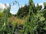 lael s moon garden rochester wa lael s moon garden nursery rochester ...