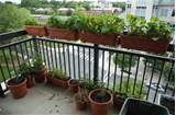 Balcony Garden Ideas Pictures, Balcony Gardening – Tips On Gardening ...
