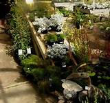 Nursery Road Garden Supplies, one of Victoria's only native ...