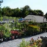 Thumbnail #6 of Harmony Farm Supply and Nursery