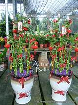 my garden directory reviews of plant nurseries garden supplies