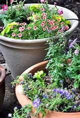 planting patio pots