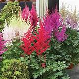 best cottage garden plants decor captivating colorful flower ideas