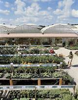 aerial view of plant nursery