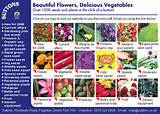 seed catalogs seeds for flower gardens and vegetable gardens