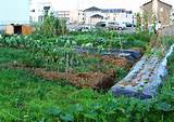backyard vegetable garden ideas backyard vegetable garden ideas beauty ...