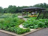interesting image above, is section of Backyard Vegetable Garden Ideas ...
