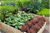 , vegetable garden ideas, vegetable garden backyard, vegetable garden ...