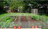 backyard vegetable garden ideas - steps to your backyard veggie garden ...