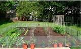 backyard vegetable garden ideas steps to your backyard veggie garden