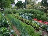18 photos of the backyard vegetable garden ideas