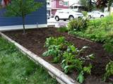 backyard vegetable gardening and top 10 vegetables and herbs to plant
