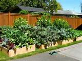 ... garden ideas picture gallery of backyard raised vegetable garden ideas