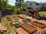 the exciting photo above is part of backyard vegetable garden ideas