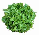Online Webstore > Vegetable Seeds > Lettuce