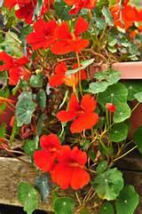 online webstore flower seeds