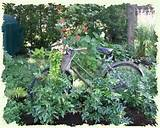garden had several old bikes suspended from some high tree branches