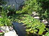 ... Your Backyard : Backyard Garden And Pond Ideas With Water Plants