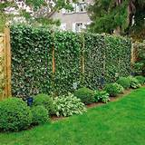 ... Designs, Plants to Beautify Garden Design and Yard Landscaping Ideas