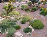 Garden Design Ideas Some Good Information about Rock Garden Plants ...