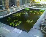 Exterior, : Mini Backyard Garden Fish Pond Ideas With Aquatic Plants