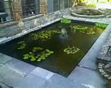 exterior mini backyard garden fish pond ideas with aquatic plants