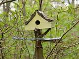 metal platform is built on to the birdhouse for occasional feeding