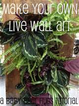 make your own living wall live art a baby bear hugs tutorial