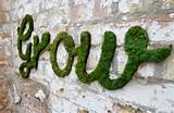 diy garden ideas living green moss graffiti