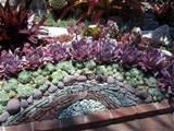 cactus succulent rock garden design