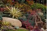 stunning succulent rock garden